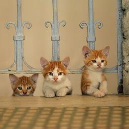 kedi, kitten, cat
