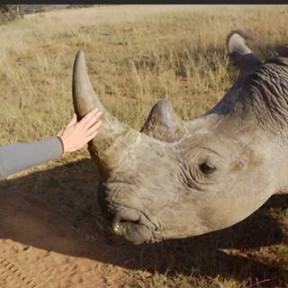 15 Ways / Arboraceous / We Are Rhino