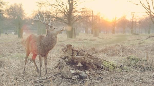 Wildlife and Mozart