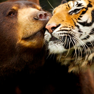 Animal Odd Couples