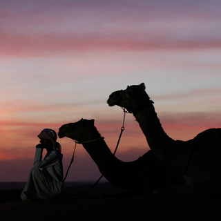 Wild Arabia - Shifting Sands - camel