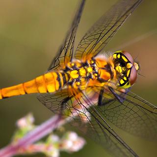 Dragonfly + Q&A
