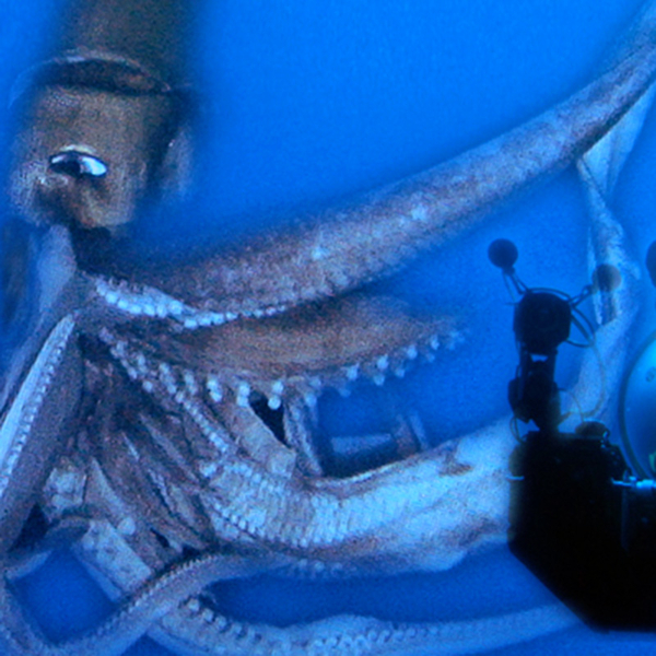 The myths and legends surrounding the giant squid