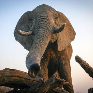Enchanted Kingdom - elephant