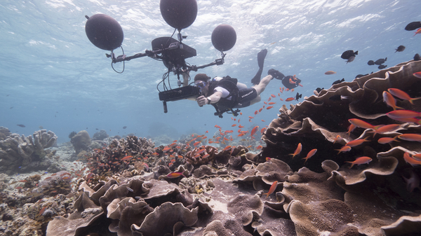 DOUBLE BILL: Blue Planet II - One Ocean / Our Blue Planet + Q&A